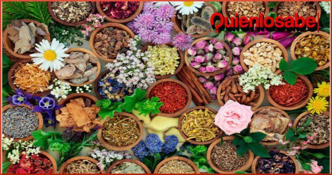 Las 9 plantas medicinales