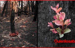 australia los arboles florecen