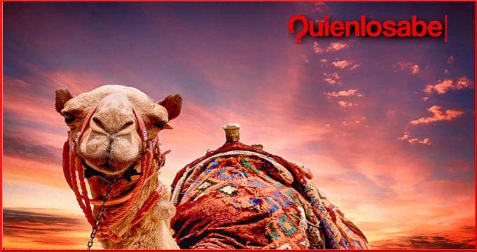 sterminio de camellos