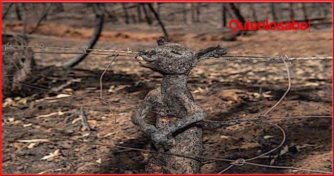 incendios-dolosos-australia