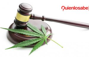 cannabis marihuana onu legal