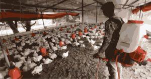 Gripe aviar China 3