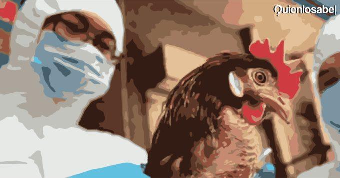 Gripe aviar China